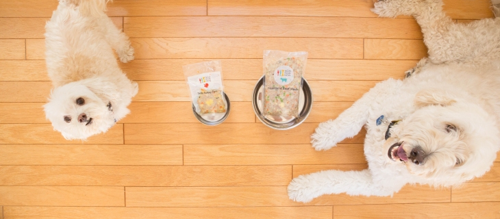 How to help your dog lose weight l NomNomNow Blog