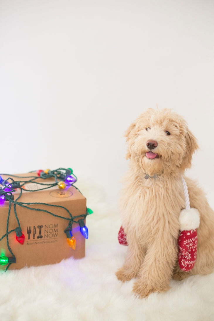 Happy howlidays! l Fresh homecooked dog food l NomNomNow blog
