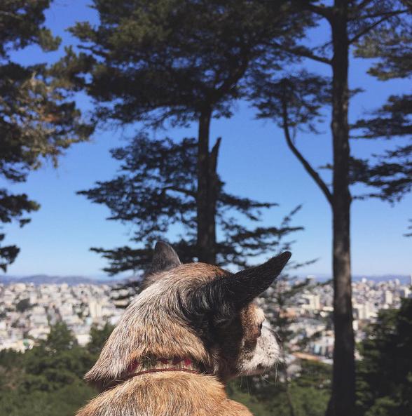 Best Dog Parks in SF: Buena Vista Park l NomNomNow Blog