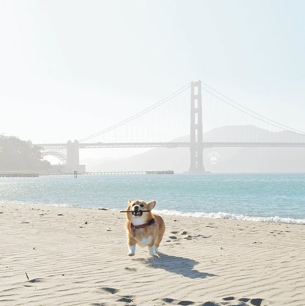 Best Dog Parks San Francisco: Crissy Field l NomNomNow Blog