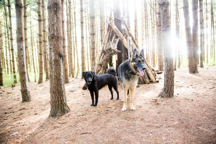 Best Dog Parks in San Francisco l NomNomNow Blog