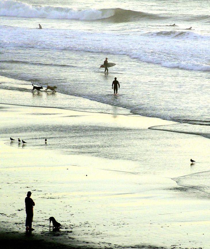 Best Dog Parks SF: Ocean Beach l NomNomNow Blog