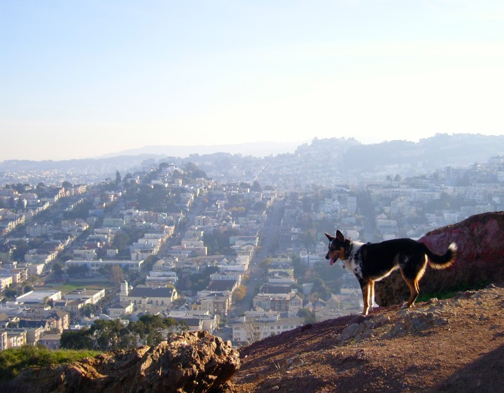 Best Dog Parks in San Francisco: Corona Heights l NomNomNow Blog