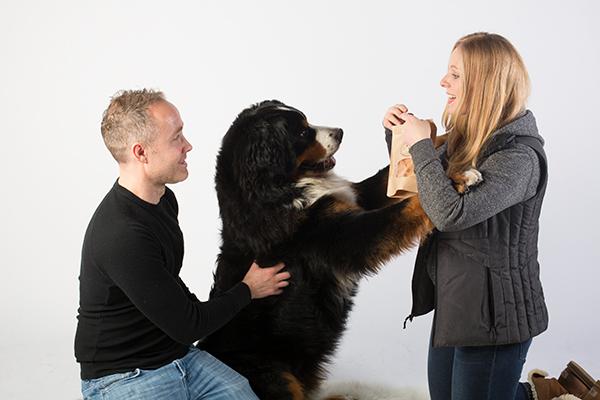 NomNomNow Review: Benny the Bernese Mountain Dog l NomNomNow Blog