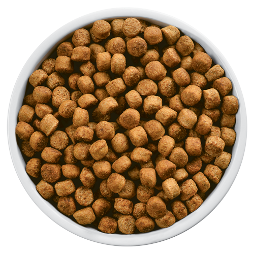 Dog food: What you don't know about kibble l NomNomNow Blog