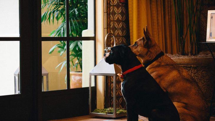 Dog Friendly Hotel Chains: Kimpton l NomNomNow Blog