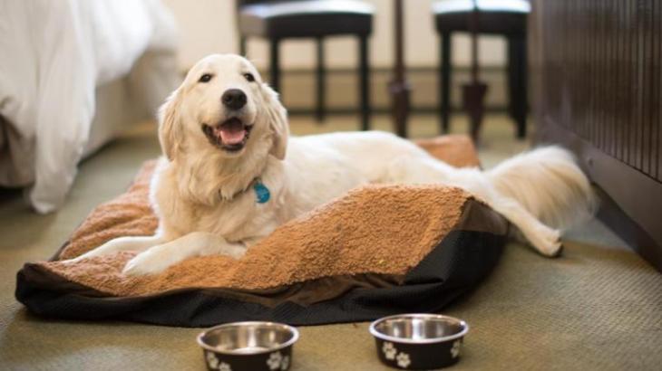 PlumpJack Squaw Valley: Top 5 Dog-Friendly Ski Resorts l NomNomNow Blog
