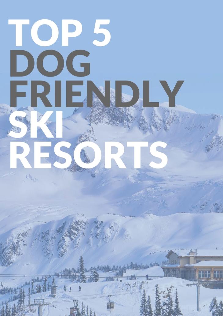 Top 5 Dog-Friendly Ski Resorts l NomNomNow Blog