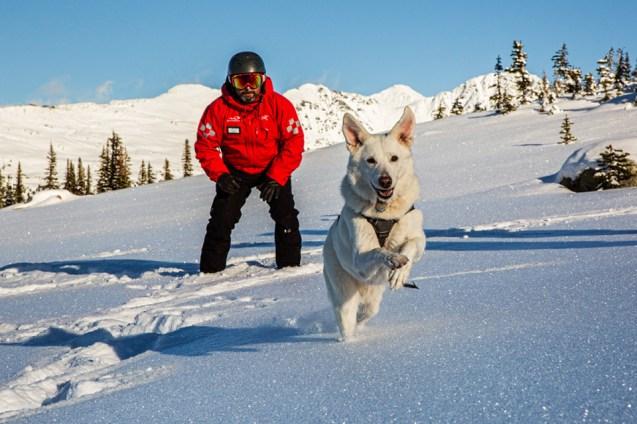 Blackcomb Whistler: Top 5 Dog-Friendly Ski Resorts l NomNomNow Blog