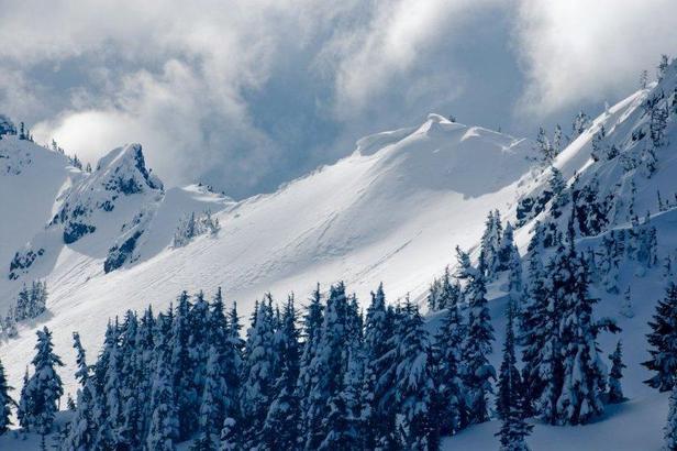 White Pass Ski Area: Top 5 Dog-Friendly Ski Resorts l NomNomNow Blog