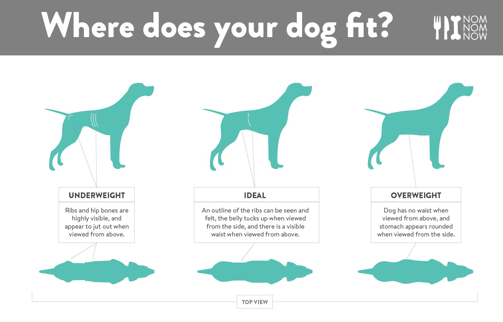 dog-ideal-weight-infographic-l-nomnomnow.jpg