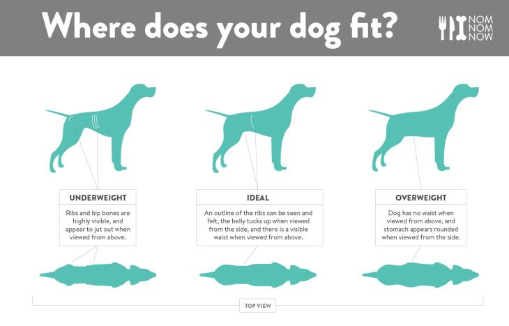 Dog Ideal Weight Infographic l NomNomNow.jpg