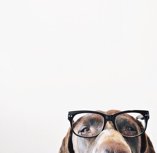 BHA BHT ethoxyquin PG l-ascorbic acid, dicalcium phosphate, calcium carbonate for dogs l NomNomNow Blog