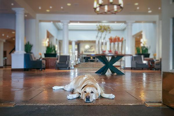 Dog Friendly Hotel Chains: Fairmont l NomNomNow Blog