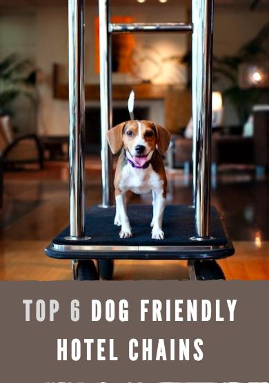 6 Best Dog Friendly Hotel Chains l NomNomNow Blog