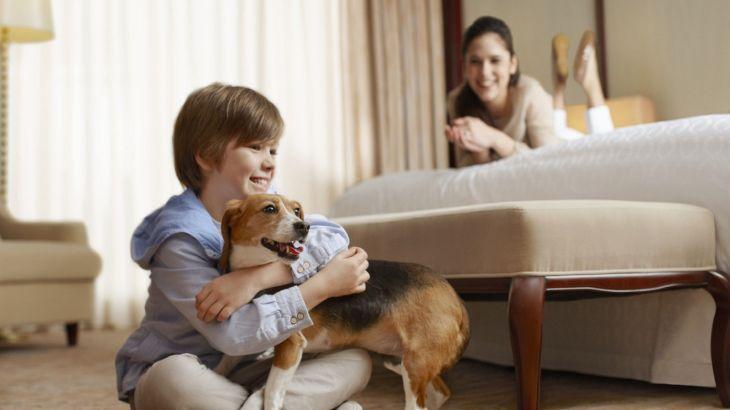 Dog Friendly Hotel Chains: Sheraton l NomNomNow Blog