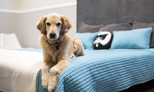 Dog sitting dog boarding Wag Hotels l NomNomNow Blog