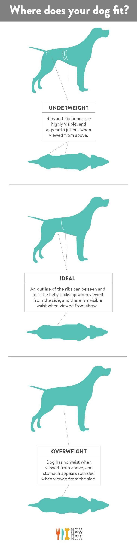 Dog Ideal Weight l NomNomNow Blog