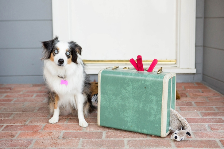 How to Fly with Your Dog, Flying with a dog l NomNomNow Blog