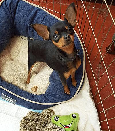 Petunia l Hopalong Animal Rescue l NomNomNow Blog