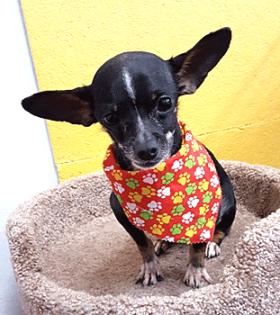 Taquito l Hopalong Animal Rescue l NomNomNow Blog