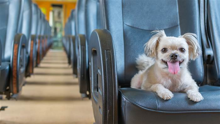 How to fly with your dog l NomNomNow Blog