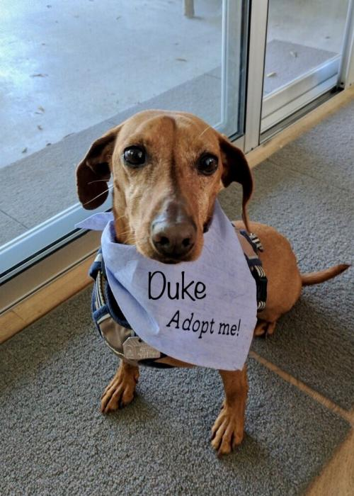 Duke Dachshund Rescue of Los Angeles l NomNomNow Blog