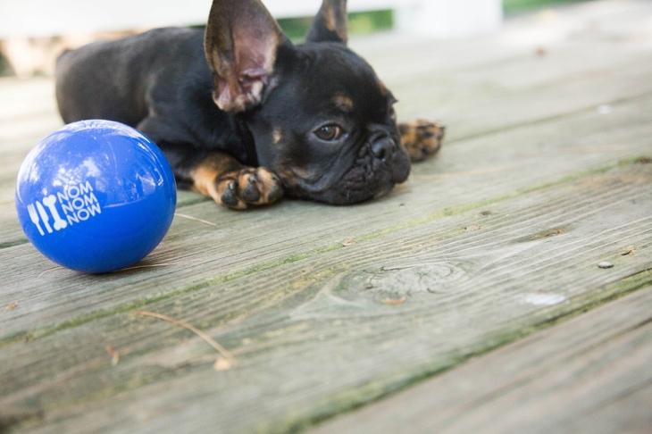Dog safety tips, summer safety l NomNomNow Blog