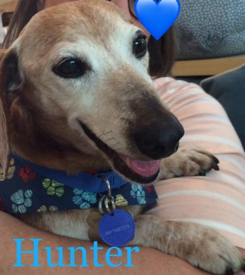 Hunter Dachshund Rescue of Los Angeles l NomNomNow Blog