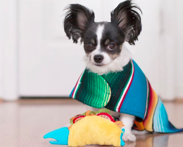 Dog Friendly Mexican bars restaurants Cinco de Mayo Los Angeles l NomNomNow Blog