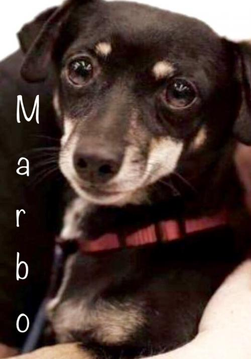 Marbo Dachshund Rescue of Los Angeles l NomNomNow Blog