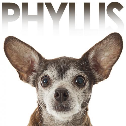 Rescue dog Phyllis l Barks of Love & NomNomNow