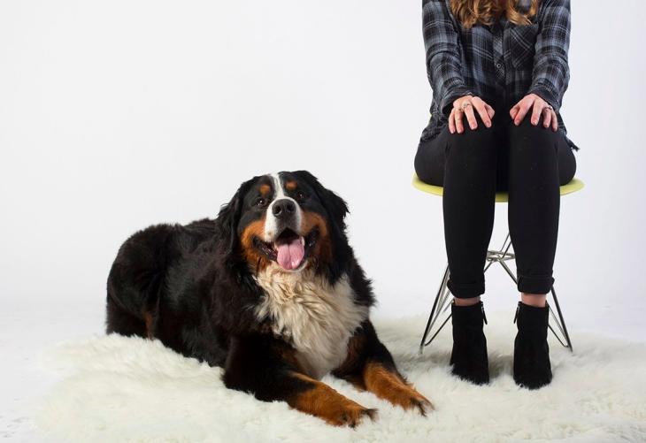 Emotional Support Animal, Emotional support animals l NomNomNow Blog