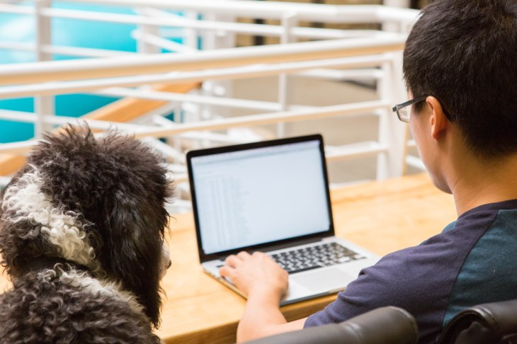 6 Benefits of dogs in the workplace, dog benefits l NomNomNow Blog