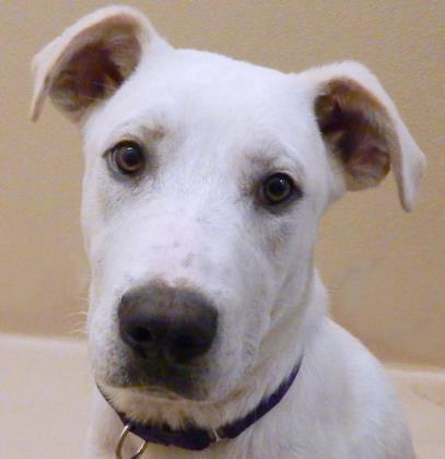 Valley Humane Society: Mac l NomNomNow Blog