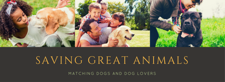 Saving Great Animals l NomNomNow Blog